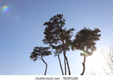 trees and sunlight