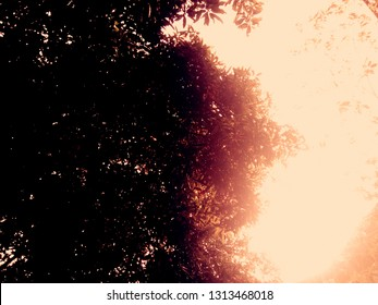 Trees and sunlight at noon - Image