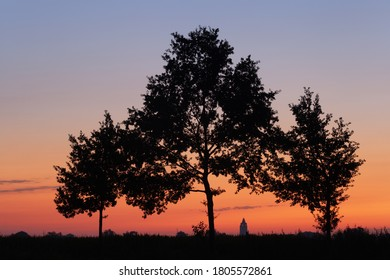 Trees at sunrise with the city of Oudenaarde at the background.