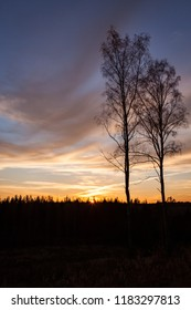Trees and sunset clouds in Finland
