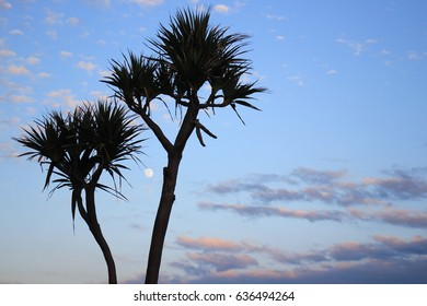 Trees with sunset sky background