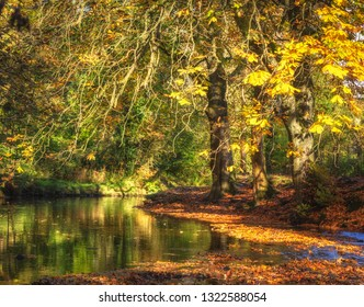 Trees surrounded by autumn leaves and stagnant water in British national park.