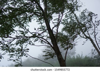 Trees sway by strong wind