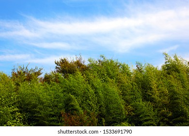 trees swaying in the autumn wind