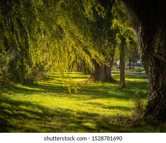 Trees swaying in gentle wind and sunlight