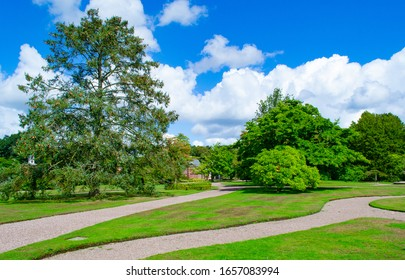 Trees at Tatton Park in Cheshire