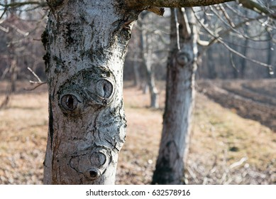 The trees tell. Bark in winter version.