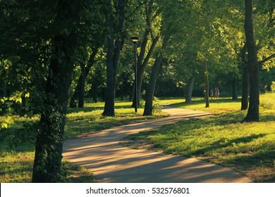 Trees Texas park