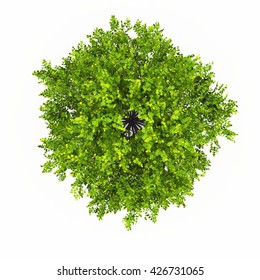 trees top view isolated white background