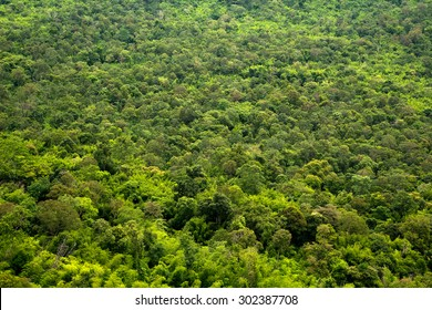 Trees Top View Texture And Background