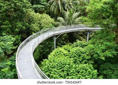 trees top walk in singapore