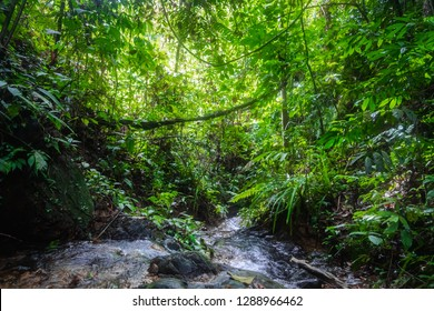 Trees in tropical  rainforest jungle in Bukit Lawang, North Sumatra, Indonesia.