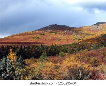 Trees and tundra have vivid late fall colors on a mountainside in Denali National Park, Alaska, only weeks before winter snow begins