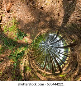 trees in a tunnel - abstract spherical view of a forest