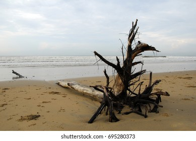 Trees uprooted at Shankarpur Beach leisure hangout beach in west bengal India