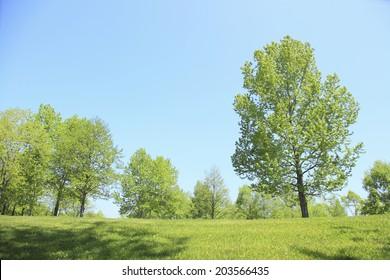 Trees Of Various Fresh Green