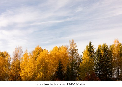 Trees in vibrant autumn colors in golden sunlight landscape