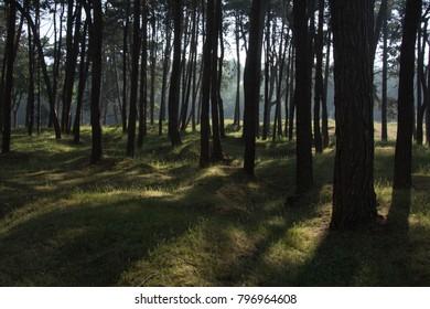 Trees at Vimy Ridge France