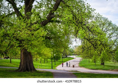 Trees and walking paths at Patterson Park, Baltimore, Maryland.