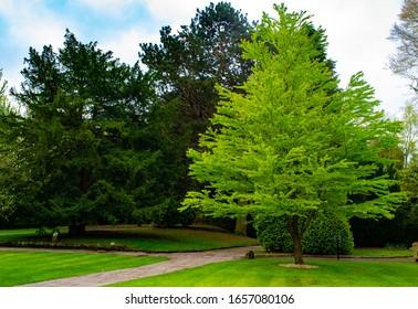 Trees at Walton Hall and Gardens, Cheshire