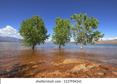 Trees in the water, Sand Hollow State Park, Utah