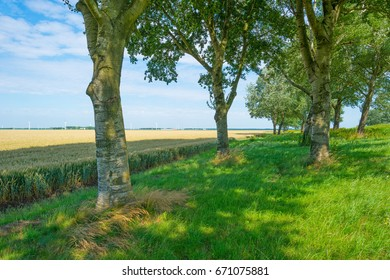 Trees and wheat in sunlight in summer