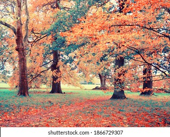 trees whispering colourful and enchanted