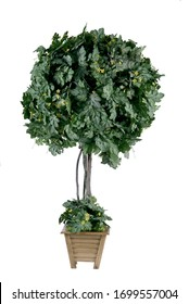 trees with white ground, pot plants that can be used in the home