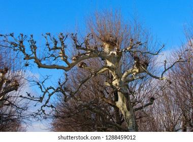 Trees in Wien