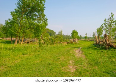 Trees and wild flowers in a field in sunlight in spring