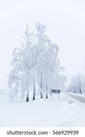 Trees in winter are covered with snow near the road