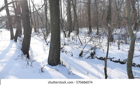 trees winter forest snow, landscape nature frozen the river