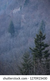 Trees in winter over the Loue river in Franche-Comté, France