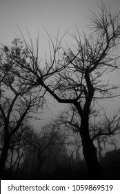 Trees without leaf in the dark mist with silhouettes scene of the tree.