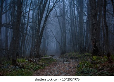 trees without leaves in spring misty forest in the mountains of the Caucasus