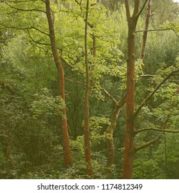 Trees in a woodland.