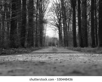 Trees and woods in black and white
