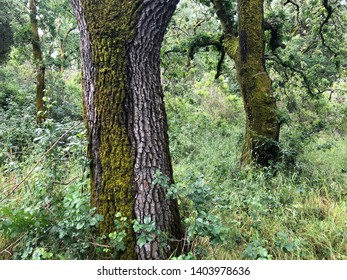 Trees in woods covered in moss