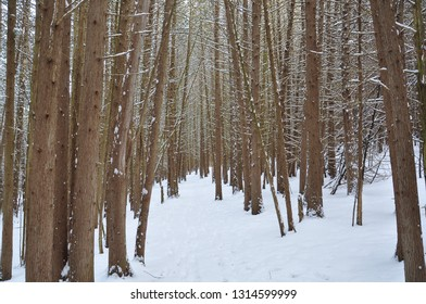 Trees in the woods in winter