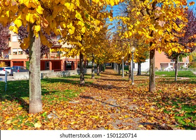 Trees with yellow foliage growing along sidewalk covered with fallen autumn leaves in Alba, Italy.