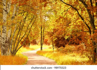 Trees of Yellow Leaves and Branches