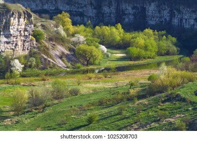 Trees with young leaves and flowering trees in a canyon by the river. Spring landscape.