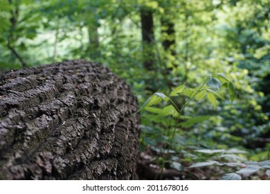 Treestump in the front and leafs in the back