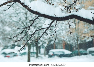 Treetop branches in winter snow, idyllic wintertime season scenery detail