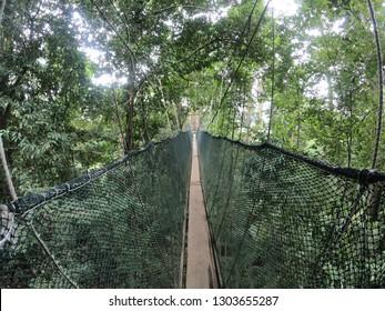 Treetop Canopy Walk at Poring hot spring Ranau  sabah, Malaysia.