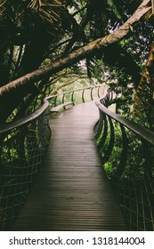 Treetop Canopy Walkway at Kirstenbosch Botanic Garden | Aerial Boardwalk in Cape Town, South Africa