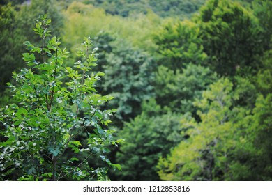 treetop forest green nature background