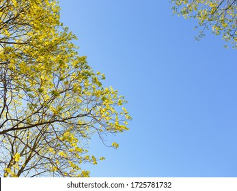 treetop with Green leaves and Blue sky background sunlight in Forest