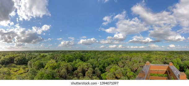 Treetop panorama with a viewing platform in the front corner.  Taken in Florida, so mix of palm and other tropical trees.  Copy space in sky if needed.