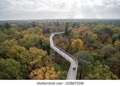 A Treetop Path